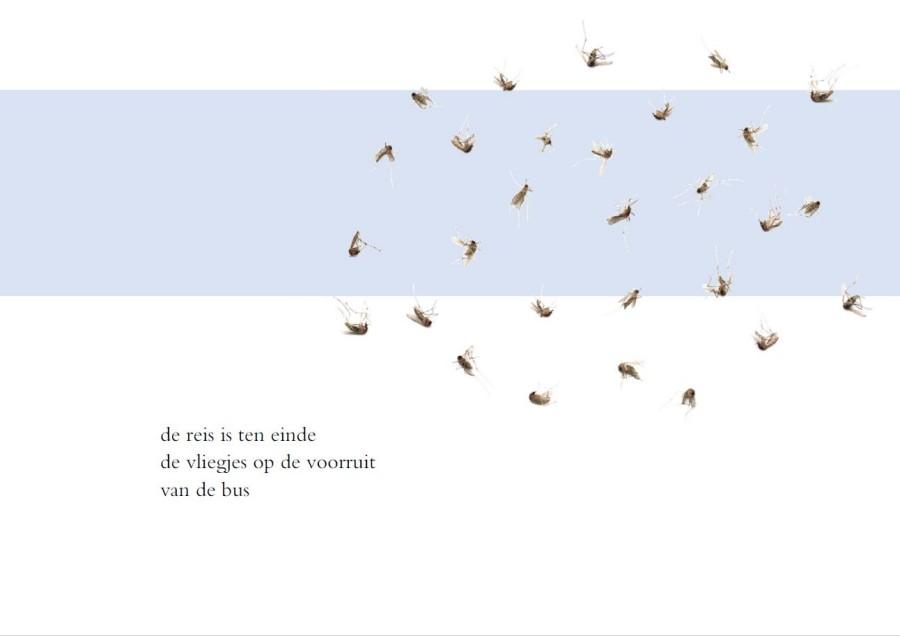 Vliegjes op de voorruit