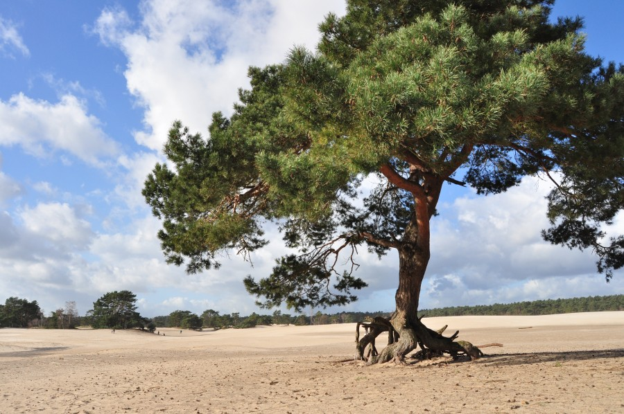 Soest - Lange duinen